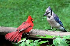 The Blue Jays and Cardinals are the Favorites to Advance to the World Series photo: Pinterest