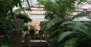 UWM's greenhouse open up to students for tours
