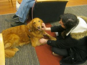 Kelly Wolff, an occupational therapy major, says hello to one of the dogs.
