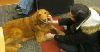 Therapy animals provide stress-free environment for students