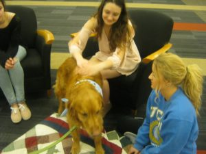 A  student pets Cooper, one of the therapy dogs.