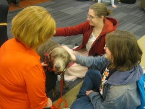 Two female students pet a therapy dog while his owner looks over.