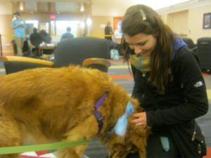 Abby Stein, a nutritional science major pets one of the dogs, Cooper.