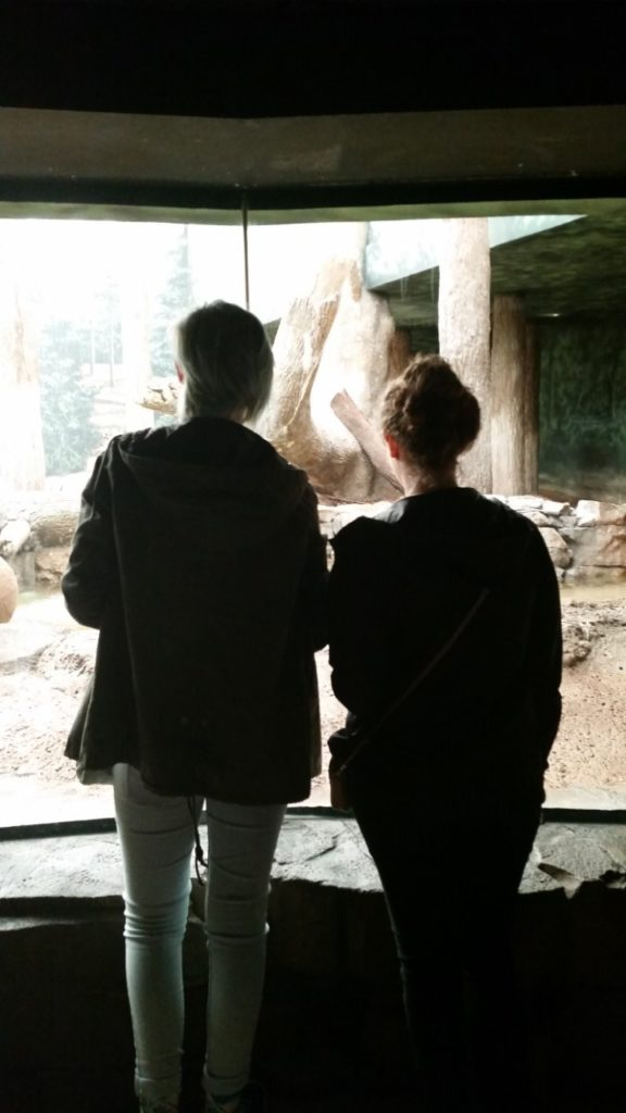 Two students viewing the tiger exhibit on the Fall Welcome Zoo Trip