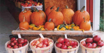 Pumpkins, Apples and Where to Find Them