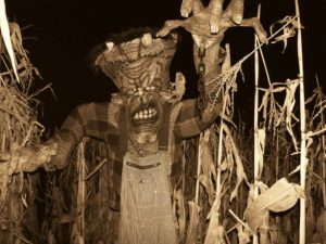 haunted-cornfield-2